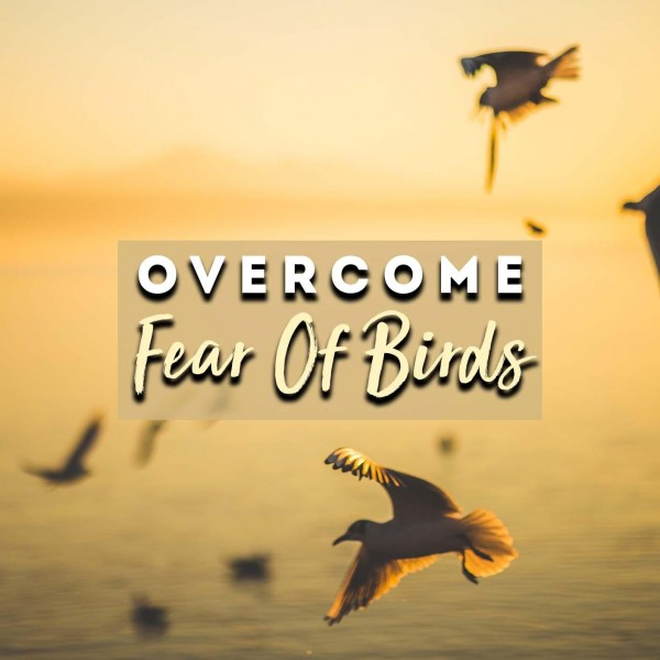 Overcome Fear Of Birds Hypnosis