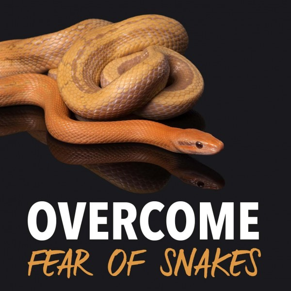 Overcome Fear Of Snakes Hypnosis