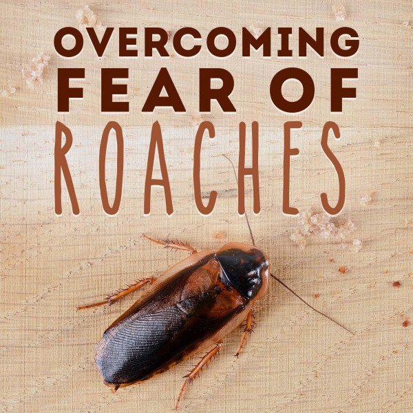 Overcoming Fear Of Roaches Hypnosis