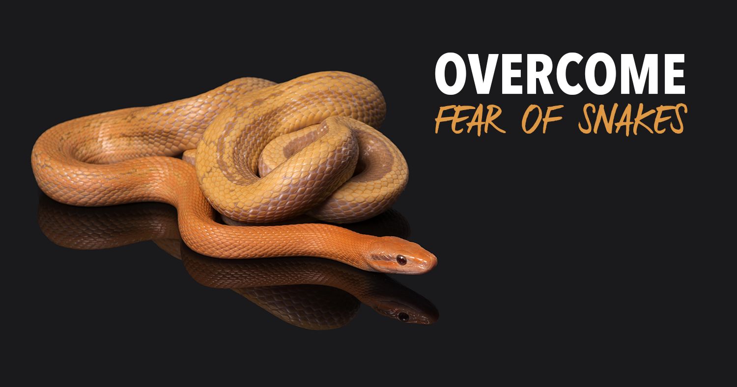 Overcome Fear Of Snakes Self Hypnosis Download